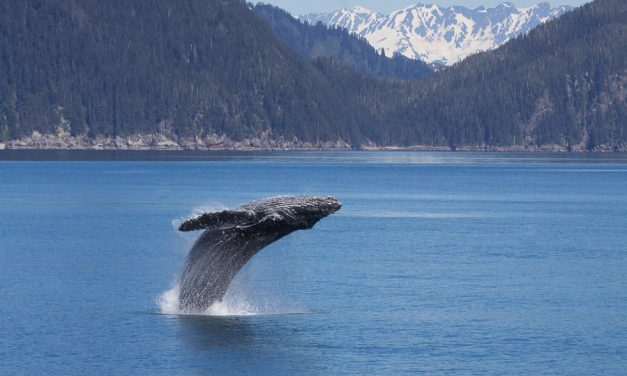 Whale Watching – Giants of the Deep
