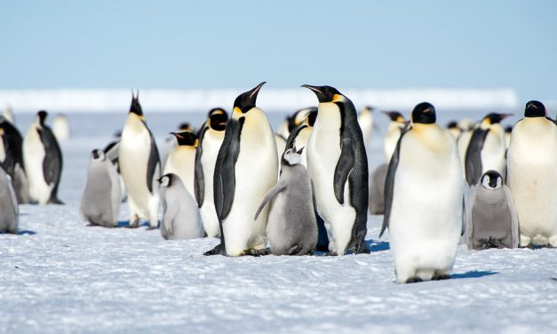 Penguins in the Antarctic  – Expedition to the End of the World