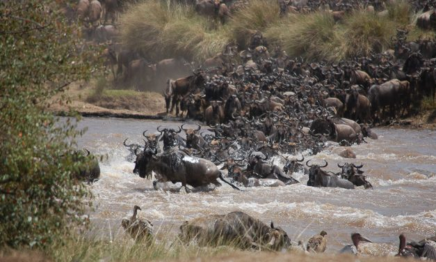 The Great African Migration – The Serengeti Ecosystem