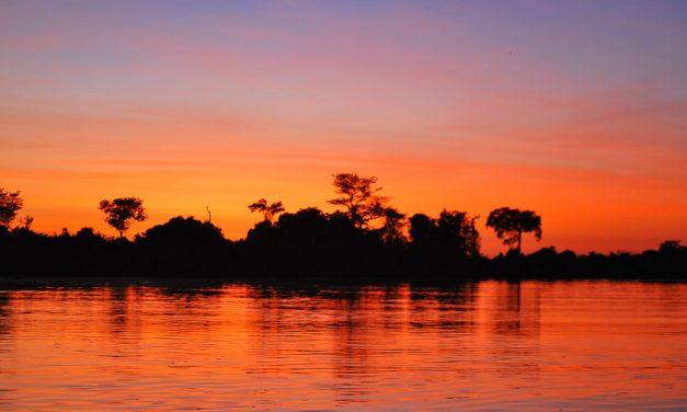 The Pantanal Jaguar – the Elusive Cat