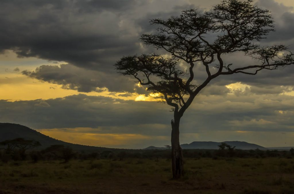 Typical view of the savanah in Eastern Africa, this time in the Serengeti as the sun goes down.