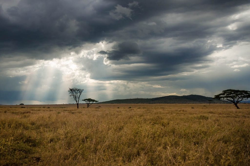 Evening sky in the Serengeti. Th storm clouds were gathering in the late afternoon but there was enough room for a bit of sun to shine through still. This was taken after a great day on safari but there was still just enough time left to go see a leopard.