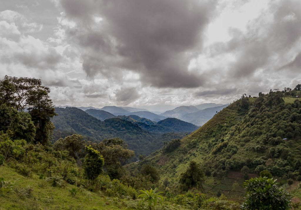 The Bwindi Forest is one of the last homes of Mountain Gorillas.