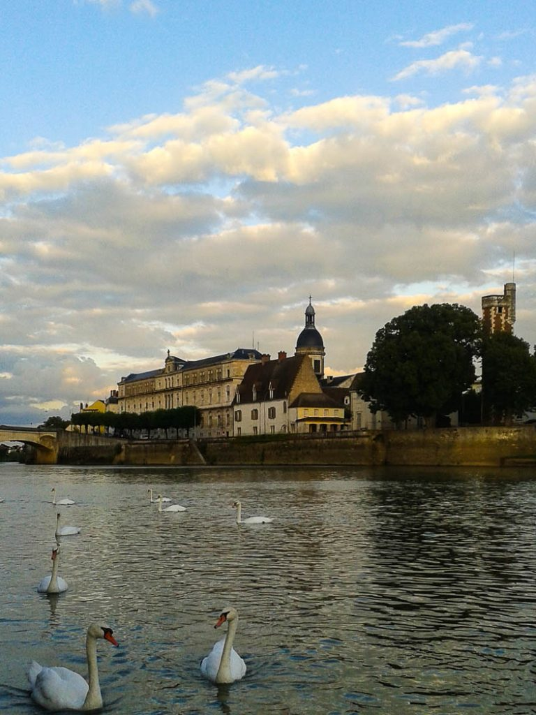 Swans in France on the river Saone