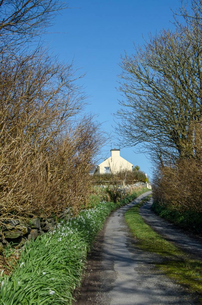 A regular narrow road in County Cork in the Spring.