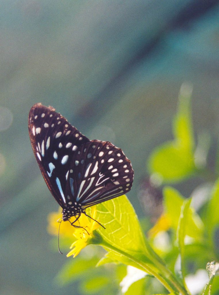Taken in the Butterfly Park in Kuala Lumpur