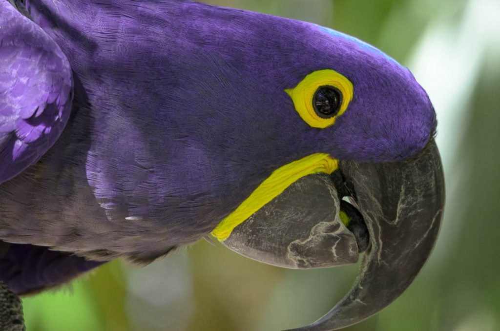 Parrots have extremely strong beaks.