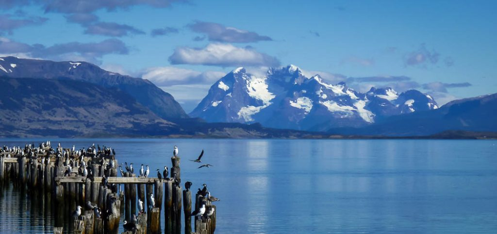 Patagonian Cormorants sitting on an old rotting pier in Puerto Natales, Chile.